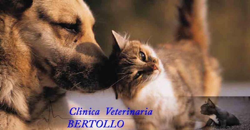 offerta vaccinazione animali domestici Camisano - occasione applicazione microchip cani Vicenza