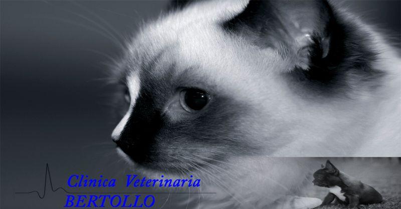 occasione sterilizzazione animali Camisano - offerta terapie di profilassi cura animali Vicenza