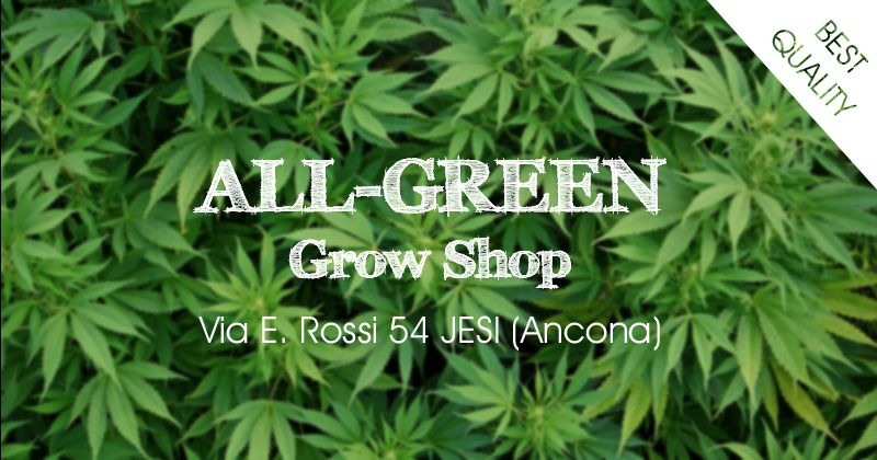 ALL GREEN offerta grow shop ancona - occasione grow shop jesi