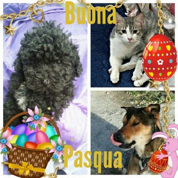 Occasione Pensione Cani E Gatti Buona Pasqua Da Sihappy