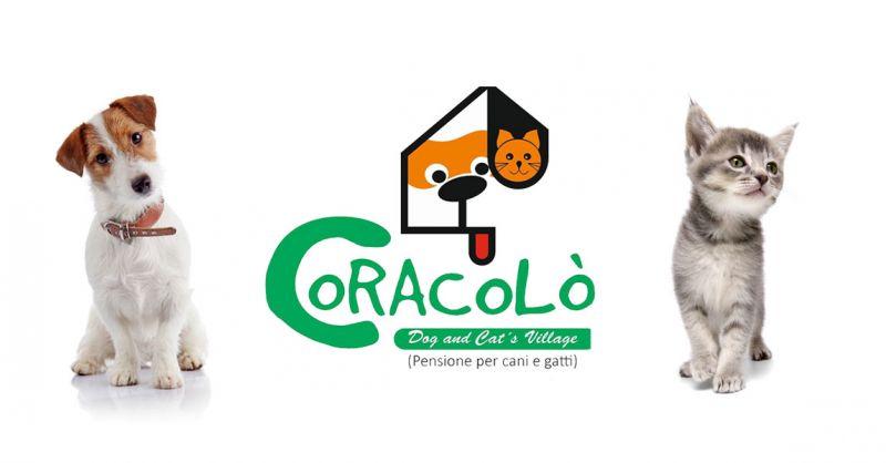 Coracolo di Ciro Coraggio offerta pensione cani gatti apice - occasione pensione animali