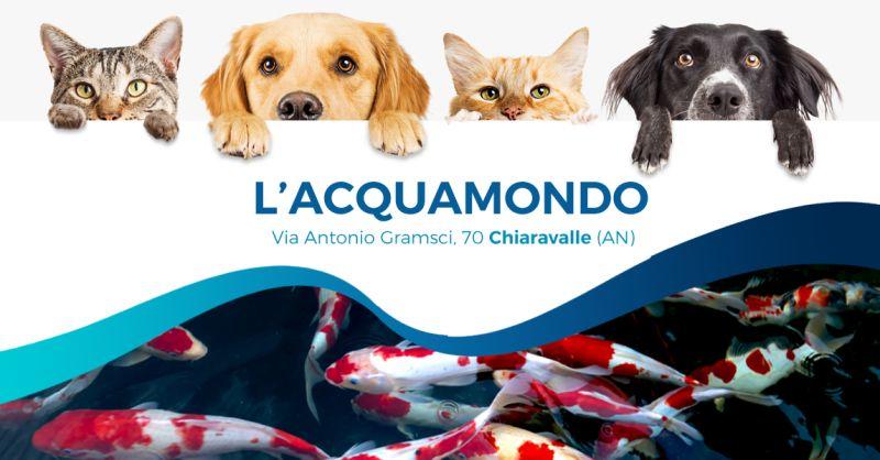 Offerta Vendita Acquario Carpe Koi Ancona - Occasione Alimenti per animali domestici Ancona
