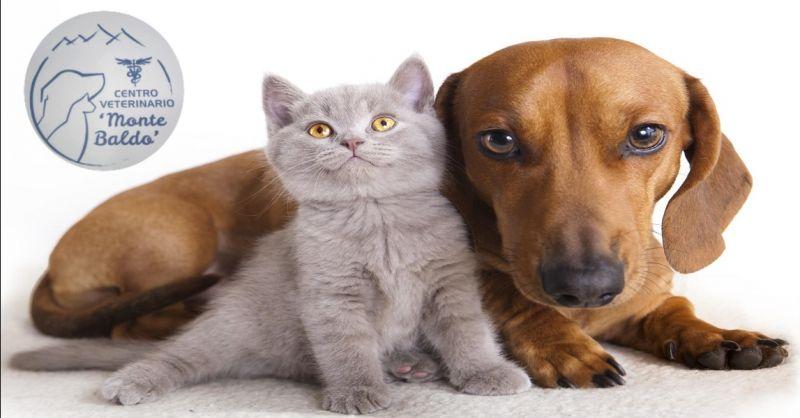 offerta vaccinazioni veterinarie cuccioli a Villafranca Verona - occasione microchip animali