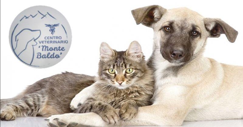 offerta servizio ecografia animale domestico Verona - occasione radiologia per animali a Verona