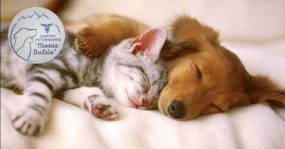 offerta veterinario a domicilio a villafranca verona occasione visita veterinaria a domicilio