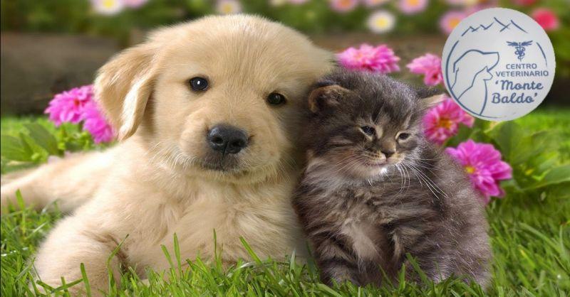 offerta servizio di chirurgia per animali domestici - occasione centro veterinario Monte Baldo