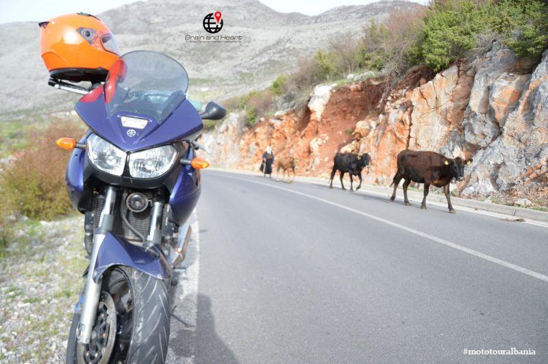 Gelegenheit Motorradtouren auf dem Balkan - Promotion von Motorradtouren auf dem Balkan