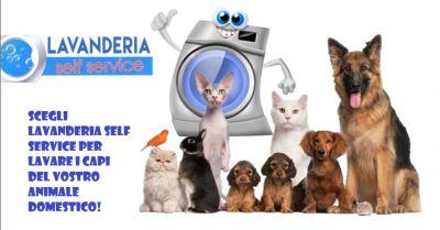 offerta lavanderia self service animali occasione lavatrice per indumenti animali a piacenza