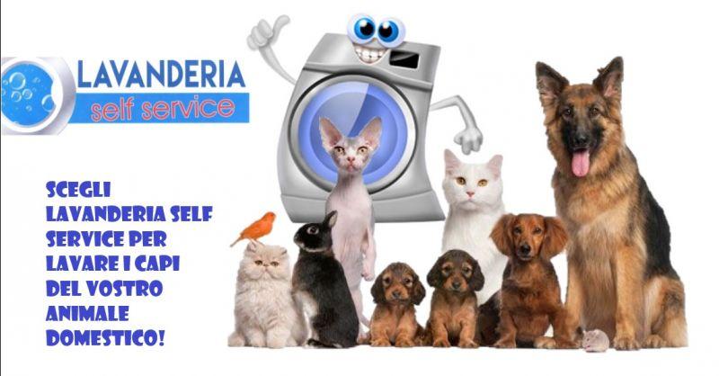 offerta lavanderia self service animali - occasione lavatrice per indumenti animali a Piacenza