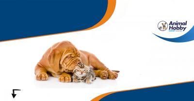 offerta vendita cibo per animali domestici taranto animal hobby