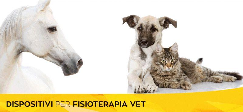 offerta riabilitazione fisioterapia animali da compagnia - occasione studio veterinario trieste