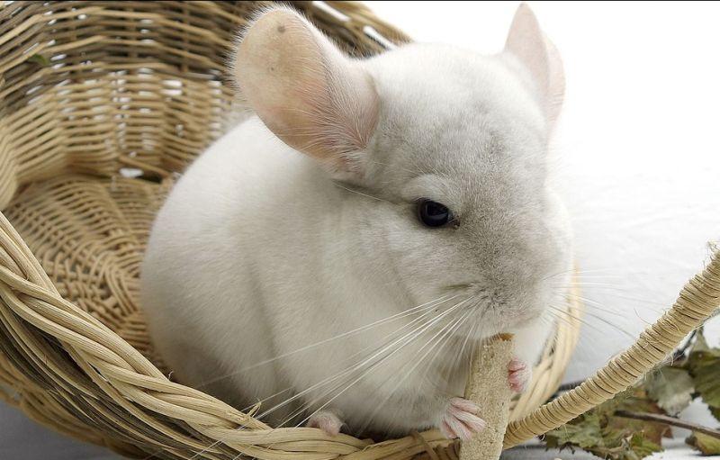 offerta Prevenzione filariosi vacinazioni animale domestico - occasione studio veterinario
