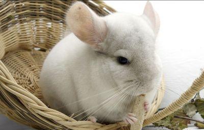 offerta prevenzione filariosi vacinazioni animale domestico occasione studio veterinario