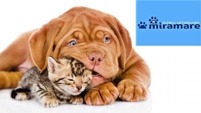 offerta ambulatorio veterinario pronto soccorso animali occasione terapia intensiva animali