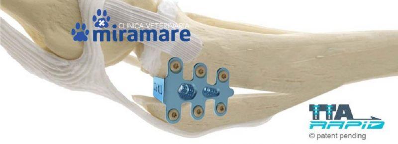 CLINICA VETERINARIA MIRAMARE offerta ortopedia veterinaria Trieste promozione TTA RAPID