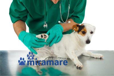clinica veterinaria miramare offerta tecarterapia veterinaria trieste