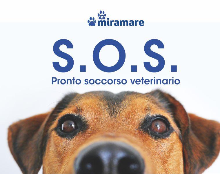 CLINICA VETERINARIA MIRAMARE offerta pronto soccorso veterinario - promo urgenze veterinarie
