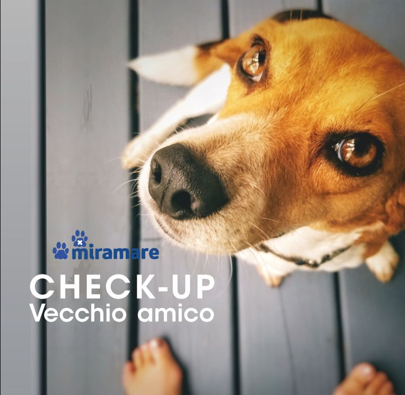 CLINICA VETERINARIA MIRAMARE offerta check up veterinario specifico animali anziani cani gatti