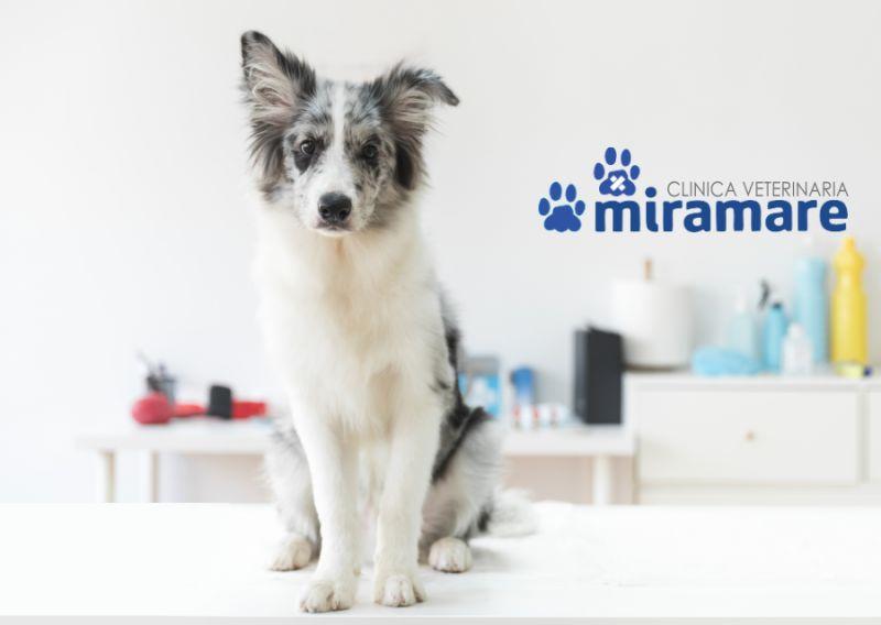 CLINICA VETERINARIA MIRAMARE offerta anestesia veterinaria – promozione chirurgia veterinaria