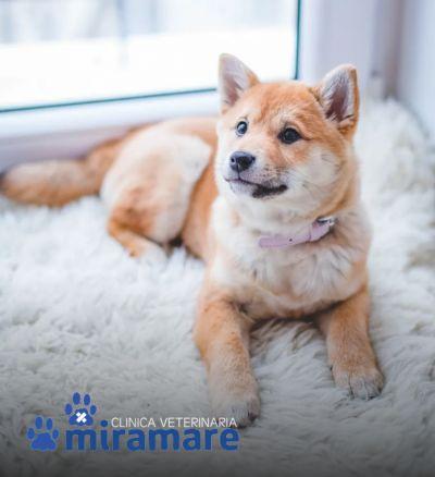 clinica veterinaria miramare offerta clinica veterinaria di qualita veterinario emergenza