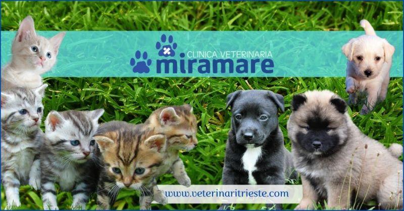 promozione prestazioni mediche veterinarie e piani sanitari di supporto al cucciolo - CLINICA VETERINARIA MIRAMARE