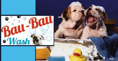 bau bau wash offerta toelettatura professionale a terni occasione lavaggio cani a terni