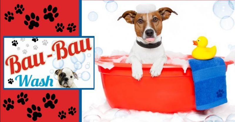 BAU BAU WASH offerta toelettatura cani a Terni - occasione servizio di toelettatura a Terni