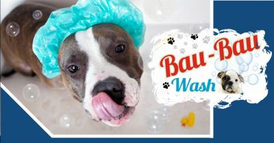 bau bau wash offerta toelettatura a terni occasione lavaggio animali self service a terni