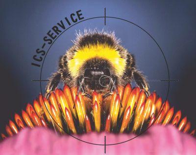 offerta disinfestazione calabroni ics service promozione bonifica da insetti ics pronto interve