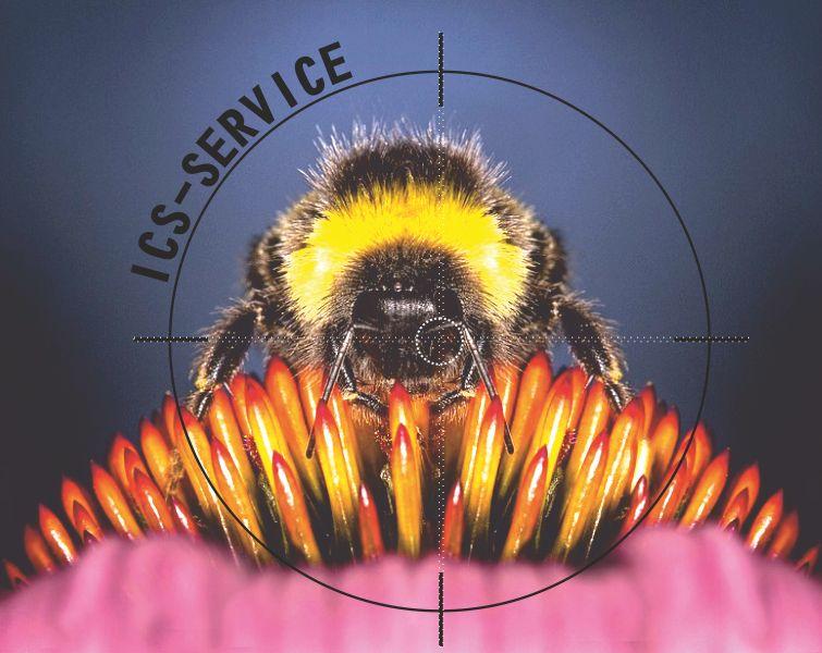 offerta disinfestazione calabroni ics service-promozione bonifica da insetti ics pronto interve