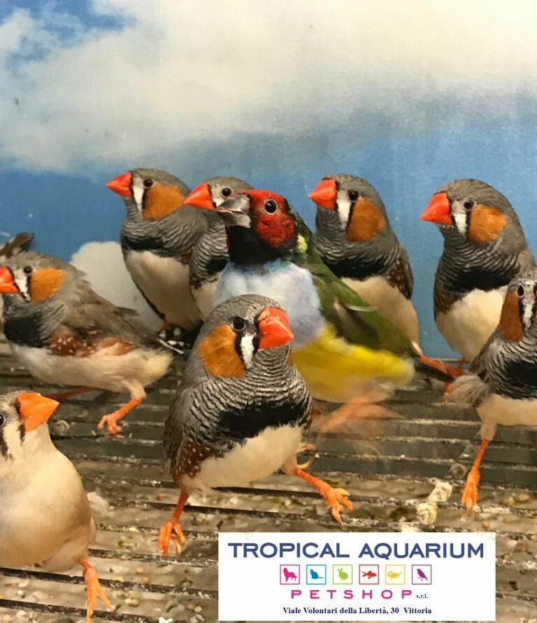Nuovi volatili da Tropical Aquarium Petshop