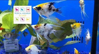 tropical aquarium petshop srl offerta petshop occasione negozio animali ragusa