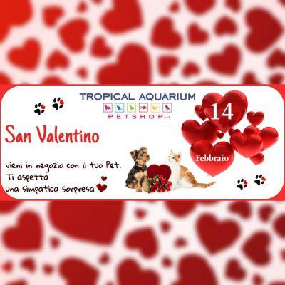 san valentino da tropical aquarium petshop