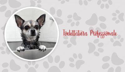 offerta toelettatura professionale cani promozione spa amici a 4 zampe lupo alberto