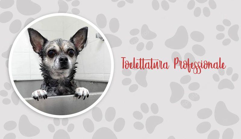 Offerta Toelettatura professionale cani - Promozione spa amici a 4 zampe Lupo Alberto