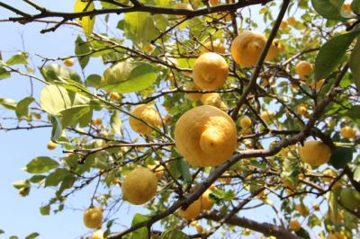 offerta occasione prodotti agricoltura biologica la bottega naturale offanengo cremona