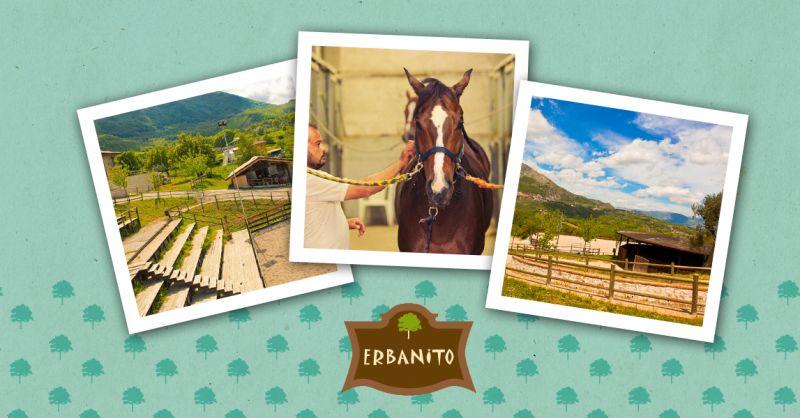 offerta percorsi a cavallo vallo di diano - occasione corsi di equitazione vallo di diano