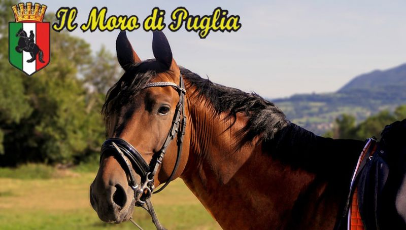 Offerta Ippoterapia autismo Puglia - pet therapy anziani taranto - ippoterapia minori taranto