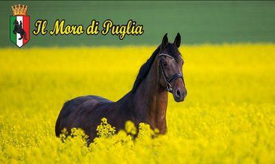 come addestrare un cavallo taranto stage equitazione a taranto a maggio