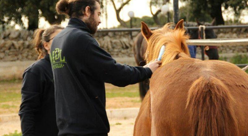 Addestramento Cavalli Murgesi in Puglia da 3 generazioni