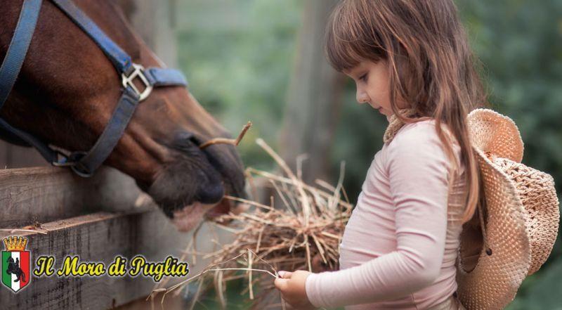 Offerta terapia con il mezzo cavallo  Crispiano – Promozione ippoterapia per adulti e bambini Puglia