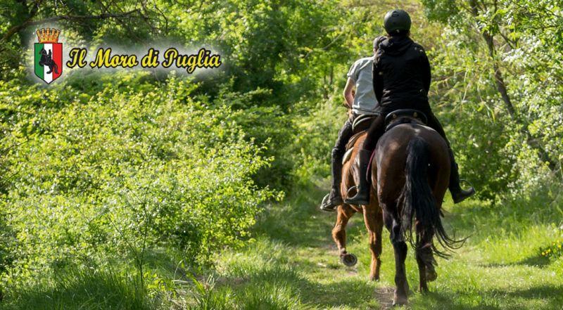 Offerta maneggio passeggiata a cavallo Crispiano Taranto – Promozione passeggiate a cavallo in puglia Crispiano Taranto
