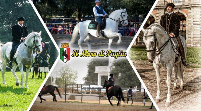 Moro di Puglia - Offerta sede operativa Scuola Real Cavallerizza Crispiano – Promozione studio teorico e pratico dell'Arte Equestre Napolitana Taranto