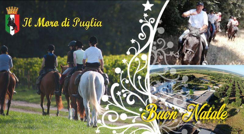 Moro di Puglia – offerta vacanze di natale passeggiate a cavallo – promozione inverno passeggiate a cavallo in puglia