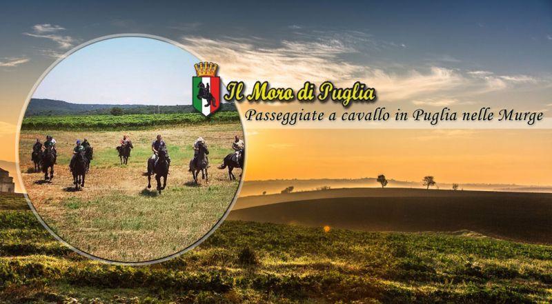 Moro di Puglia - occasione maneggio passeggiata a cavallo nella murgia in puglia