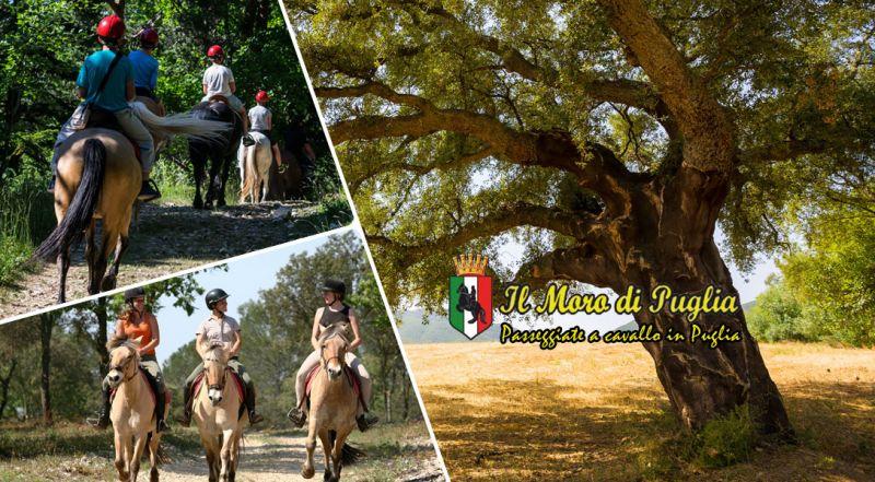 Moro di Puglia - occasione passeggiata a cavallo in puglia tra ulivi secolari