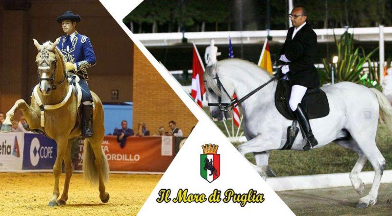 Il Moro di Puglia - occasione alta scuola spagnola di equitazione taranto
