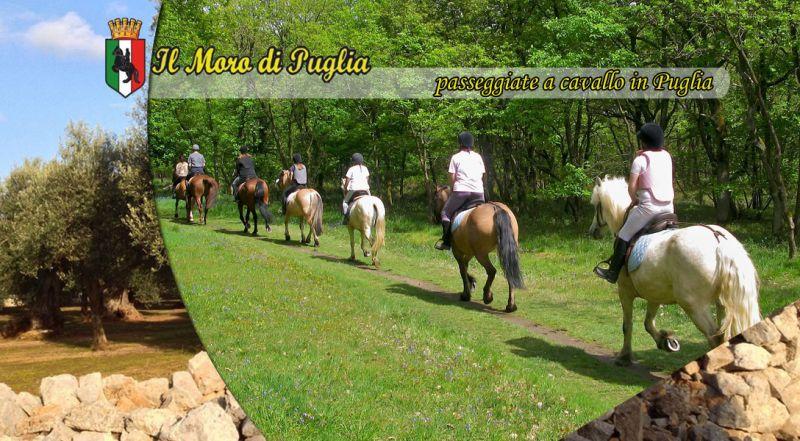Offerta Passeggiate a cavallo in Puglia tutto anno  - promozione passeggiate a cavallo taranto