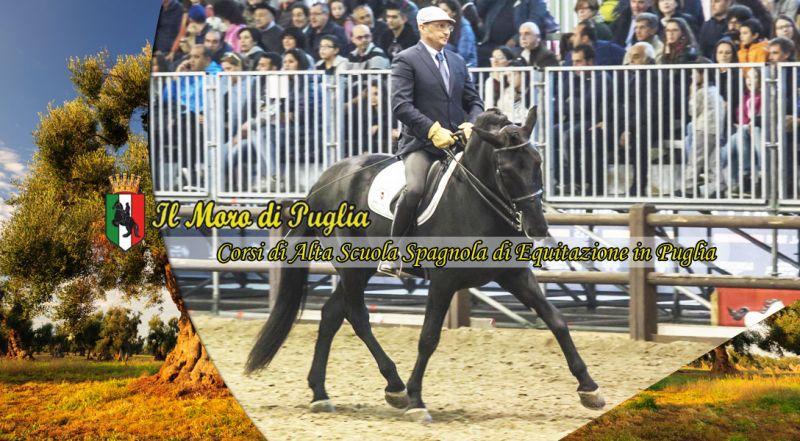 Il Moro di Puglia - Offerta Corsi di Alta Scuola Spagnola di Equitazione tutto  anno taranto