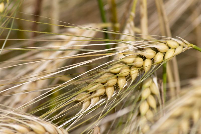 NATURE' - offerta Pasta bio Grani antichi Salerno Vallo di Diano Teggiano